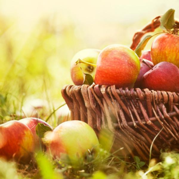 Epi Pommes