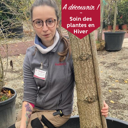 Margot Soin Des Plantes Hiver